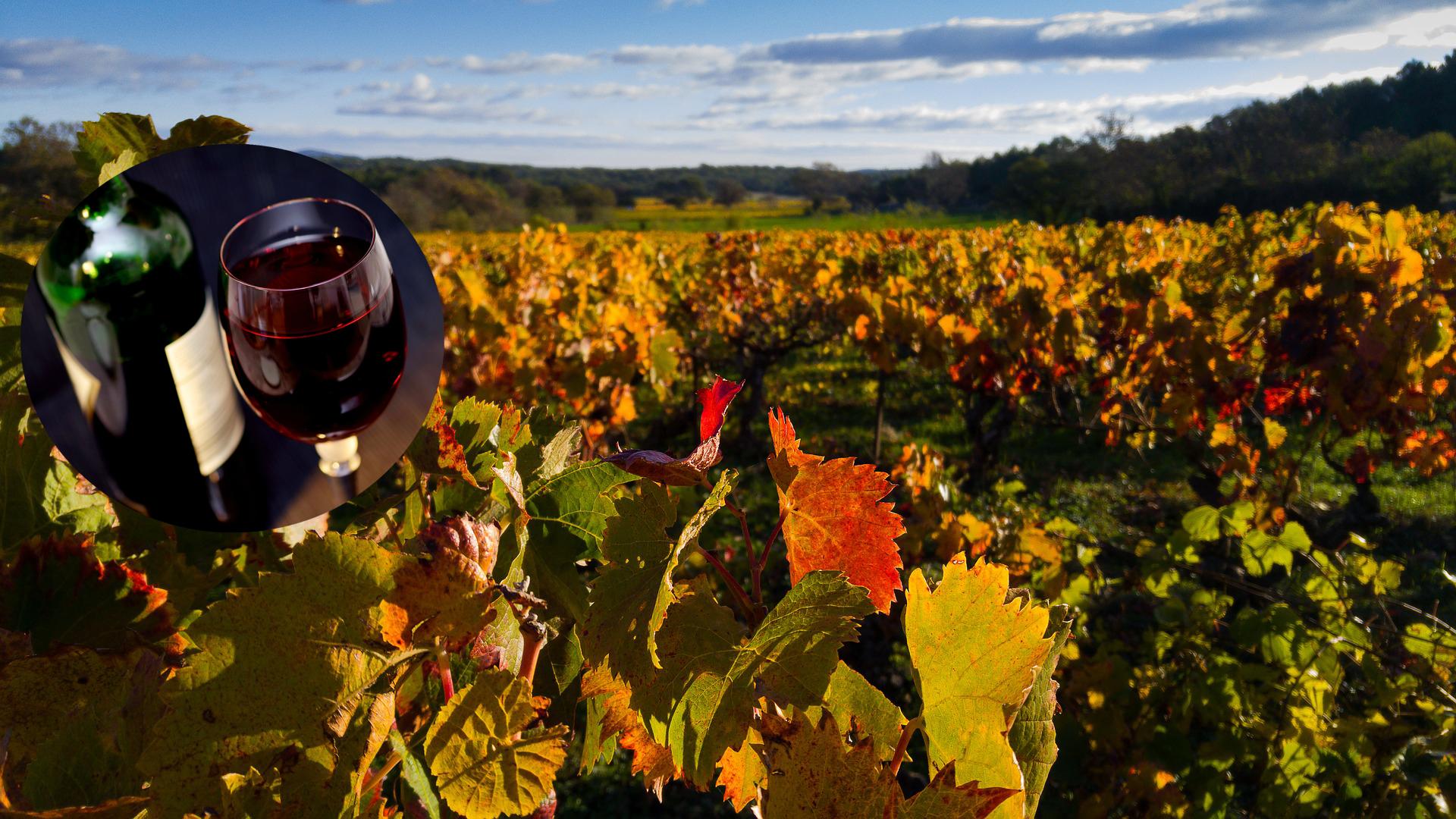 Rotwein Herbst Horitschon